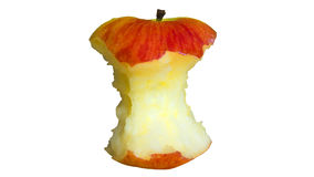 Red apple core Stock Image