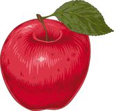 red apple dojrzałe royalty ilustracja