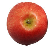 Red apple with drops of water top view royalty free stock photos