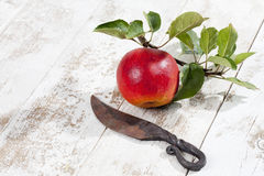 Red apple, Ecolette on branch with leaves Stock Image