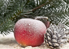 Red apple, fir branch and pine cone Stock Images