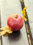 Red apple fruit, wooden bench and yellow autumn leafs, leaves Royalty Free Stock Image