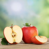 Red apple fruits in summer with copyspace Stock Images