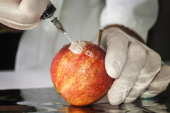 Red apple in genetic engineering laboratory, gmo food. Stock Photography