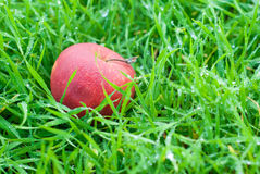 Red apple on grass Stock Photography