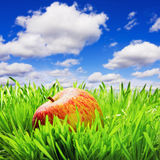 Red apple on the grass Stock Photography