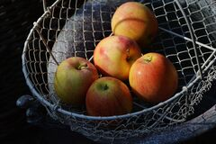 Red Apple on Gray Mesh Basket Set F 5 Royalty Free Stock Photo