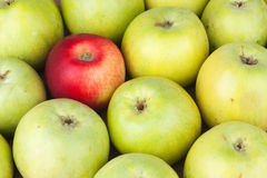 Red apple among green apples lying on sackcloth Royalty Free Stock Photo