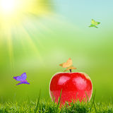 Red apple on green grass Stock Photos
