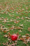 Red apple on green grass. With scattered autumn leaves stock photography