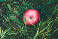 Red Apple on Green Grass Stock Photography