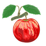 Red apple with green leaves vector illustration. Red apple with green leaves branch vector illustration royalty free illustration
