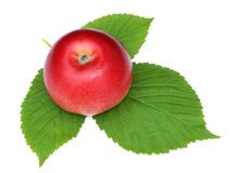 Red Apple with green raspberry leaves isolate white background n. Atural photo. for design, 3D texturing, game creation royalty free stock photos