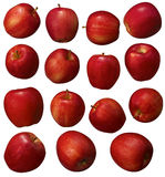 Red Apple Group Royalty Free Stock Image