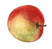 Red apple. Hand drawn watercolor painting Royalty Free Stock Photography