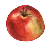 Red apple. Hand drawn watercolor painting royalty free stock photo