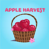Red apple harvest stock images
