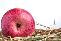 Red Apple with hay on a white background Stock Photos