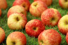 Red apple heap on the grass. Red apple heap on the grass during the day Royalty Free Stock Photos