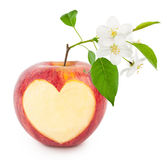 Red apple heart with leaves and flowers Royalty Free Stock Photo