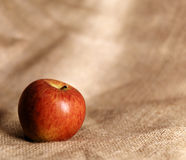 Red apple on hessian cloth Stock Images