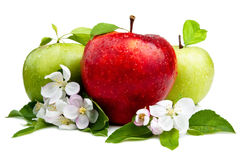 Red Apple In Front Of Two Green Apples Stock Photography