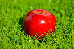 Red apple laying down on the grass Stock Images