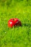 Red apple laying down on the grass Royalty Free Stock Images