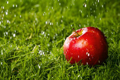 Red apple laying on the grass. Red apple laying on the grass in the rain Royalty Free Stock Images