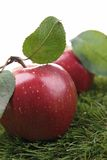Red apple and leaf Royalty Free Stock Images