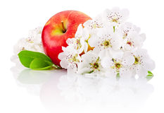 Red apple with leaf and flowers isolated on white background Stock Photos