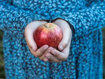 A red apple in a little girl`s hands stock photos