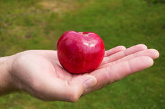 Red apple is lying on man palm Royalty Free Stock Photo