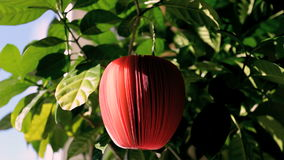 Red apple. Notebook notepaper note stock footage