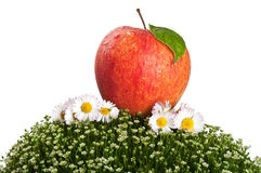 Red Apple On Green Grass Royalty Free Stock Images