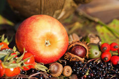 Red apple with other wild fruits Royalty Free Stock Photos