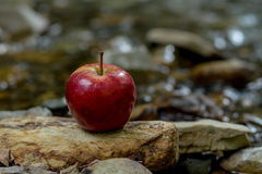 Red apple on a rock in nature Royalty Free Stock Photos