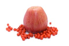 Red apple with rowan berries Royalty Free Stock Photo