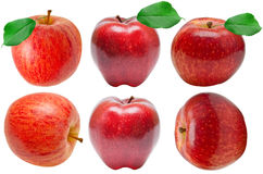 Red apple set Royalty Free Stock Images