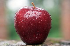 A RED APPLE WITH SHALLOW DEPTH! stock images