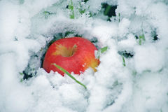 Red apple on snow Royalty Free Stock Images