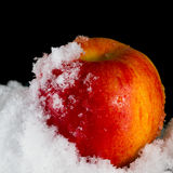 Red Apple in the snow Royalty Free Stock Photo