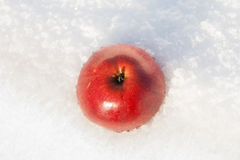 Red apple on a snow Stock Photography