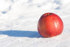 Red apple on a snow Royalty Free Stock Photo