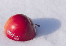 Red apple on snow Royalty Free Stock Photo