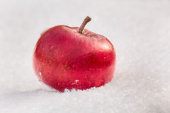 Red apple on snow close up Royalty Free Stock Photo