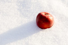 Red Apple on Snow Royalty Free Stock Photos