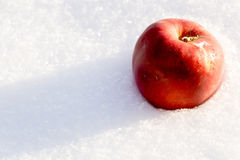 Red Apple on Snow Royalty Free Stock Image