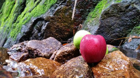Red apple and stones texture background Stock Image