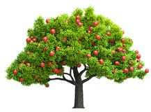 Red apple tree isolated 3D illustration. A red apple tree isolated 3D illustration. Isolation as additional in png format Stock Illustration